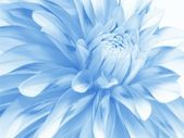 Soft blue flower — Stock Photo