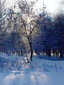 Winterzon — Stockfoto