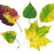 Stock Photo: Autumn different leaves
