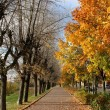 Autumn alley — Stock Photo #32790345