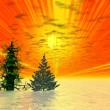 Golden sunset. Two Christmas trees — Stock Photo