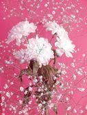 Flores blancas en rosa — Foto de Stock