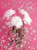 White flowers on rosy — Stock Photo