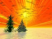 Golden sunset. Two Christmas trees — Stock Photo