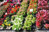 Bruxelles, bélgica, flores en la grand-place — Foto de Stock