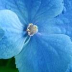 Beauty blue flower — Stock Photo