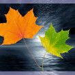 Two autumn leaves in a frame — Stockfoto