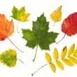 Autumn leaves — Stock Photo #33072437