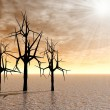 Stock Photo: Mystical spiny trees at sunrise