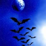 Halloween. Moon and bats — Stock Photo #33074309