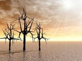 Mystical spiny trees at sunrise — Stock Photo
