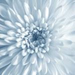 White Flower — Stock Photo #33126655