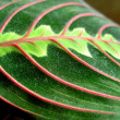Green color leaf — Stock Photo