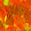 Fall leaves. Vibrant natural texture — Stock Photo #33126809