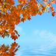 Stock Photo: Autumn scene