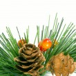 Pine and cone — Stock Photo