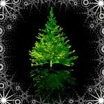 Green Christmas-tree — Stock Photo