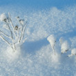 Winter plants and trees — Stock Photo