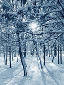 Kış, ormanda güneş — Stok fotoğraf