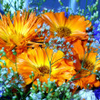 Vibrant flowers — Stock Photo