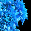Blue flowers — Stock Photo #33331381