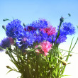 Stock Photo: Flowers cornflowers