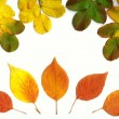 Fall leaves — Stock Photo #33551637