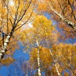 Autumnal trees and sky — Stock Photo