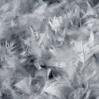 Stock Photo: Gray feathers background
