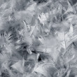Gray feathers background — Stock Photo