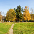 Autumnal scene — Stock Photo #33553649