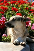 Dog in flowers — Stock Photo