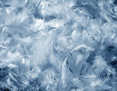 Feathers texture — Stock Photo