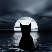 Cat and moon — Stockfoto