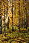 Autumnal scene - forest — Stock Photo