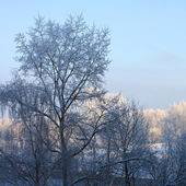 Winter landscape — Fotografia Stock