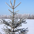 Winter landscape. Fir tree — Stock Photo