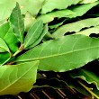 Green Bay leaves — Stock Photo