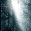 Fog and sunny rays in a forest — Stock Photo #35534889