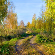 Road in autumn  forest — Stock fotografie