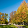Golden autumn in a park — Foto Stock