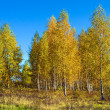 Autumn season, trees — Foto Stock