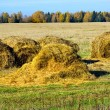 Stock Photo: Hayrick in field