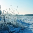 Forest in a hoarfrost and snowdrift — Stock Photo