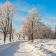Winter landscape with trees — Stock Photo #35817955