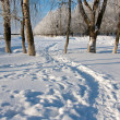 Winter landscape with trees — Stock Photo #35817959
