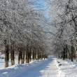 Stock Photo: Winter landscape with trees
