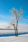 Winter landscape with trees — Stock Photo