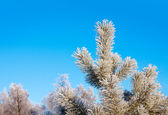 Winter landscape with fir tree — Stock Photo