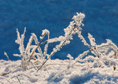 Winterlandschap met kruiden — Stockfoto